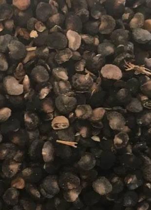 Дурман семена 50грамм (Свежий урожай)