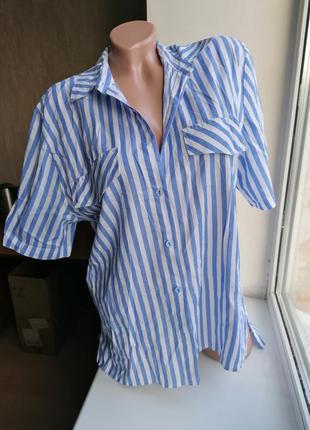 Рубашка в полоску с удлиненной спинкой (к078)