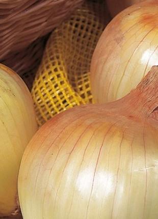 Лук севок озимый Сеншуй Эллоу 1 кг.