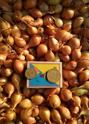 Продам лук севок собственного производства. Урожай 2019 года