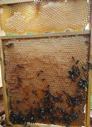 Мед стільниковий