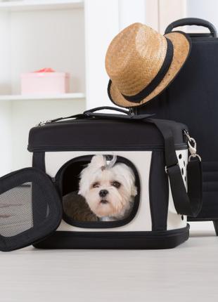Анализ на бешенство Евросправка для собак титры на антитела Офици