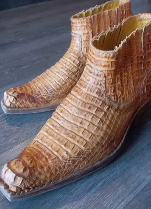 Казаки Крокодил