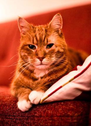 Передержка котов дома (50 грн/сутки)