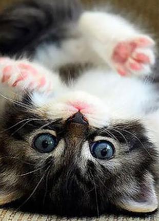 Перетримка вашого котика