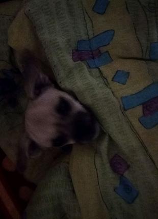 Одаю собаку панель дівчинка Одаю срочно!