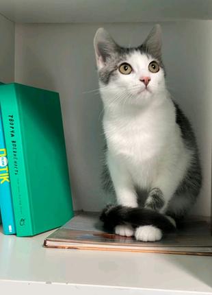 Симпатяжка Молли - котёнок бесплатно
