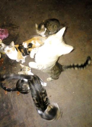 Група кошек в хорошие руки