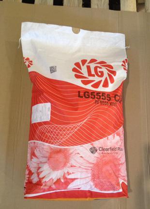 Семена подсолнечника Лимагрейн 5555 USA Франция
