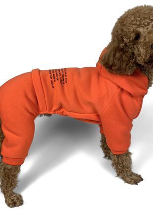 Одежда для собак, костюм трёхнитка с начёсом.