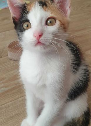 Счастье - даром (котенок, котята)