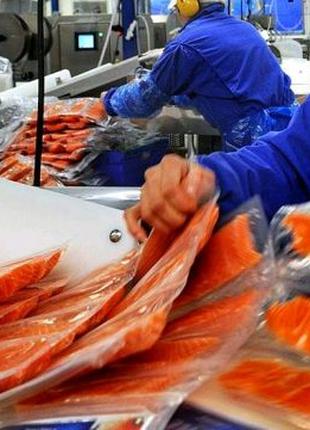 Работа на рыбном производстве