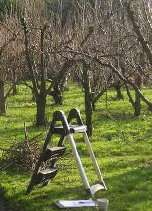 ГРАМОТНО -  обрезка деревьев