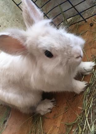 СРОЧНО! Продам декоративного кролика!