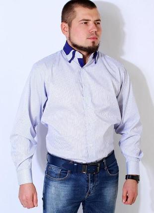 Рубашка мужская белая в синюю полоску kongres р. l-3xl. турция