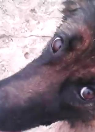Погуляю с собакой в районе ст.м.позняки.осокорки.харьковская.