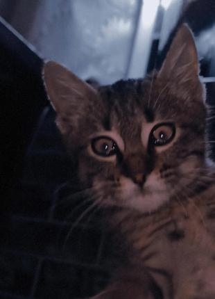 Котенок в надёжные руки!