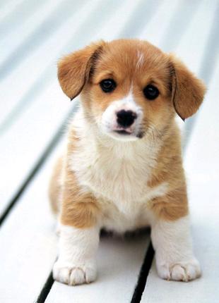 Перетримка собак