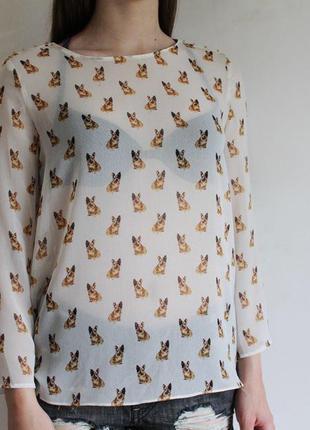 Блуза в бульдог zara принт собаки шифоновая легкая