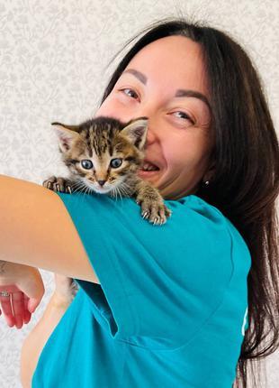 Активный котенок ищет дом