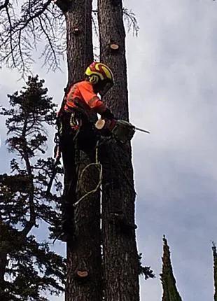 Удаление деревьев, обрезка деревьев, спил дерева в Черкасской обл