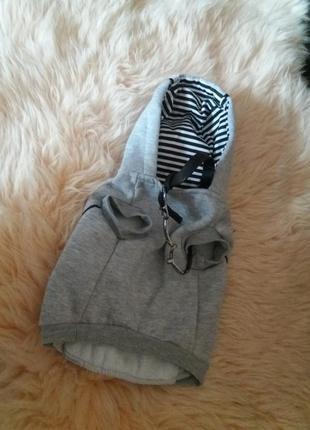 Куртка жилетку с капюшоном для маленькой собачки