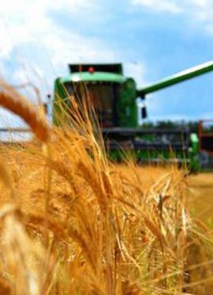Перевозка зерна. Услуги зерновозов.