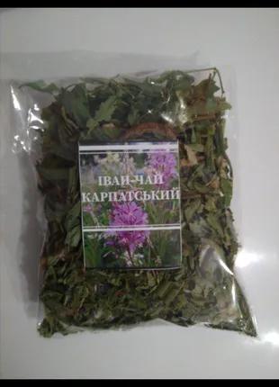 Іван-чай карпатський