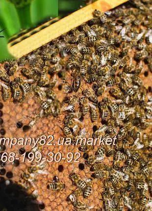 Пчелопакеты, плодные Пчеломатки Карпатской породы 2020 год