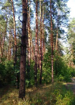 Земля под застройку Сумской район 30км от г. Сумы
