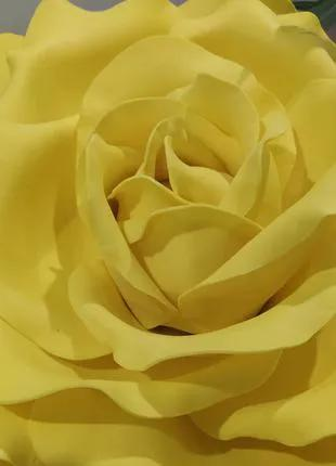 Цветок роза жёлтого цвета