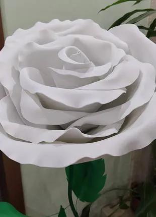 Цветок роза белого цвета