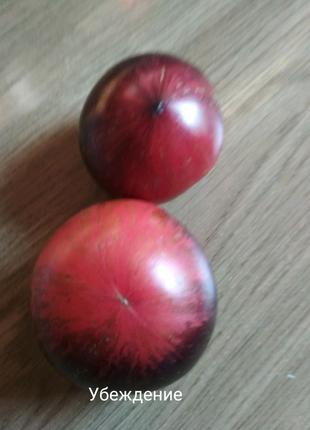Семена сортовых томатов
