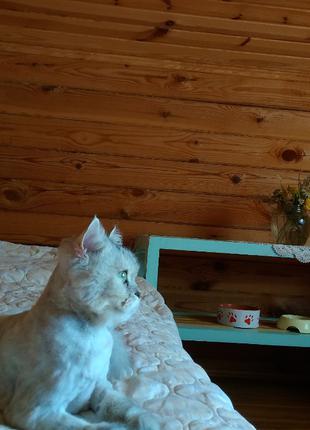 Семейная мини гостиница для котов в загородном доме
