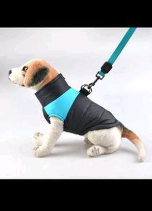 Одежда для собак+подарок