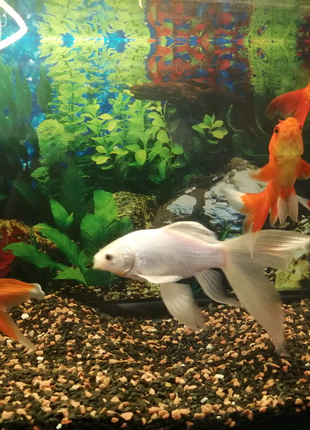 Продам рибки