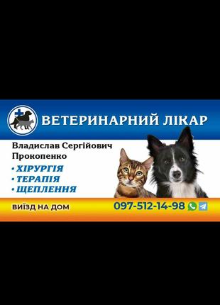 Стерелизация, кастрация кошек и собак; кесарево сечение.