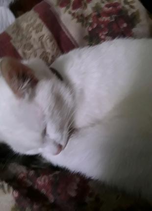 Кошка шестимесячная