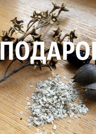 Павловния семена около 2500 шт Paulównia tomentósa морозостойкая