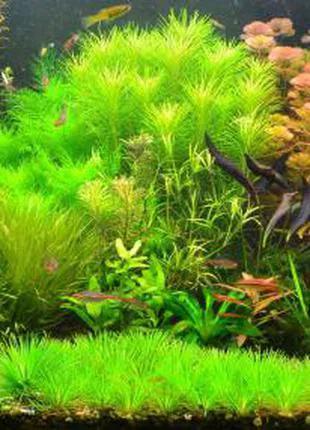 Продам излишки аквариумных растений.