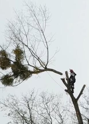 Обрезка деревьев, спилить дерево, срезка деревьев Житомир и облас