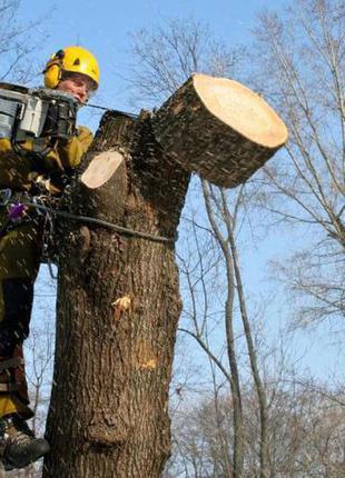 Спил деревьев,удаление деревьев, обрезка