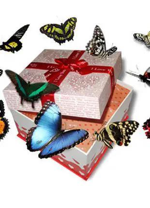 Салют живых тропических бабочек!