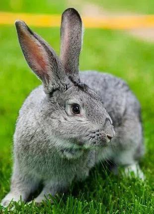Комбикорм для кролей