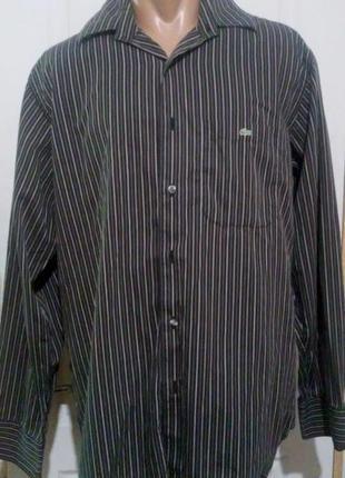 Хлопковая мужская рубашка лакоста. пог 61