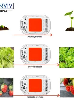 Фитосветодиод для роста растений Ming Ben Растущий свет 50 Вт