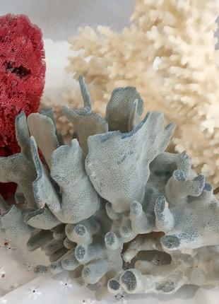 Коралы большие редкие натуральные