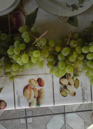 Саженцы: Винограда Подарок Запорожью, Молдова, Велес,Столетие....