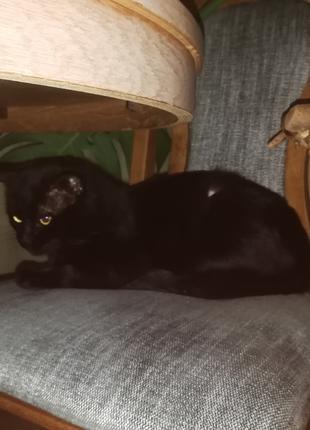 Кот черний