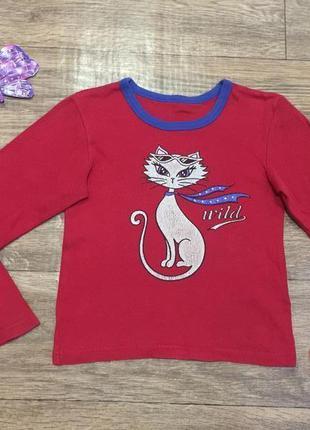 Красный реглан от tammy c блестящей кошечкой для девочки + стр...